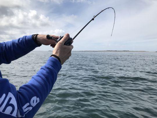 Epine d'un blank de canne à pêche