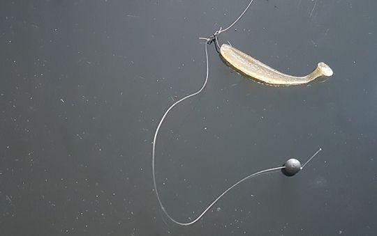 Pêche Drop shot | Technique et matériel !