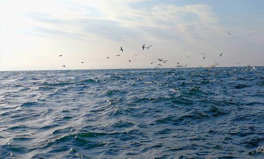 Pêche duthon auleurre