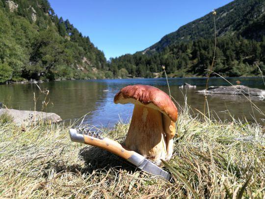cèpe-champignon-peche-montagne
