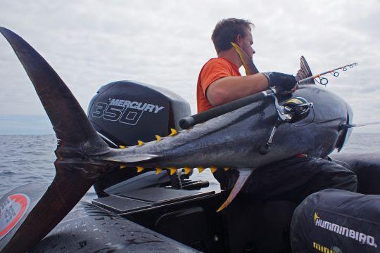 Un talon long offre un avantage au pêcheur lors du combat pour démultiplier sa force.