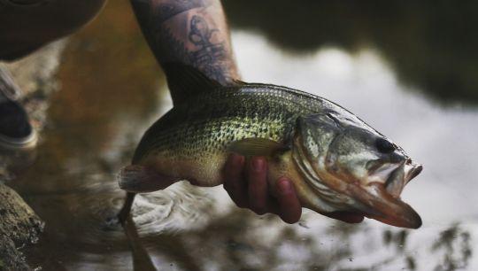 Le Catch & Release comme ligne de conduite pour assurer l'avenir des populations de poissons