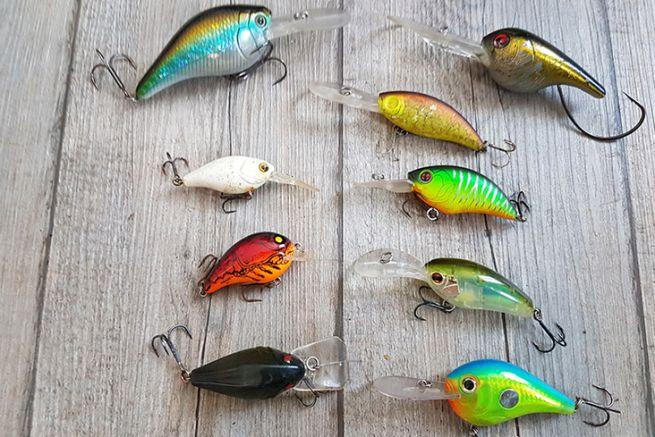 Choisir la bonne couleur de poisson nageur