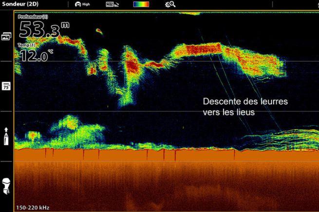 Beaucoup d'activité sous-marine sur cette image.