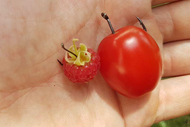 Hameçon simple numéro 6 pour une mûre ou une framboise jusqu'au numéro 1/0 pour les tomates cerises