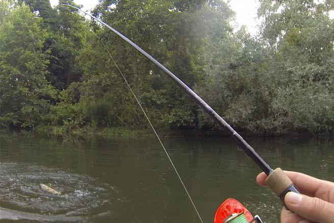 Une jolie perche de rivière prise au leurre souple avec la Mojo Bass Dropshot/Finesse