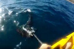 Le pêcheur se défend contre le requin-marteau