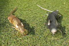 Rat des villes ou rat des champs ?