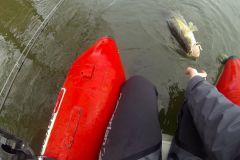 Pêche des carnassiers aux leurres avec le Deeper CHIRP+