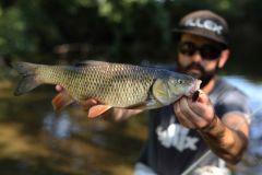 La pêche du chevesne l'été aux imitations d'insectes