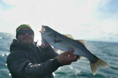 La pêche du bar au poisson nageur