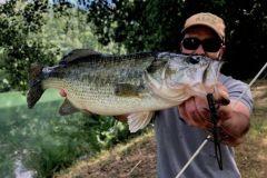 Black-bass pris en Weightless Nose Rig