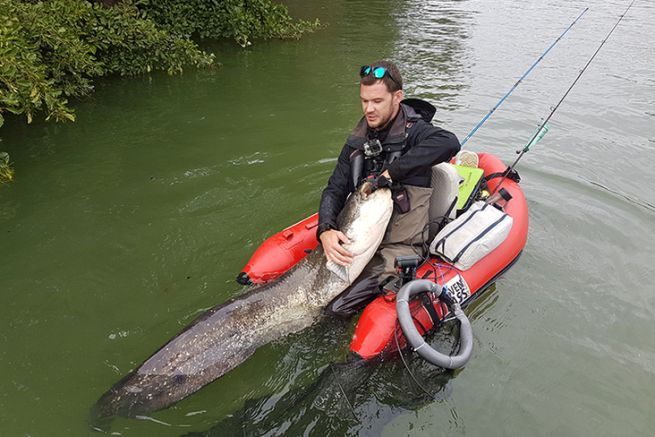 Silure de rivière pêché au bouchon en float tube